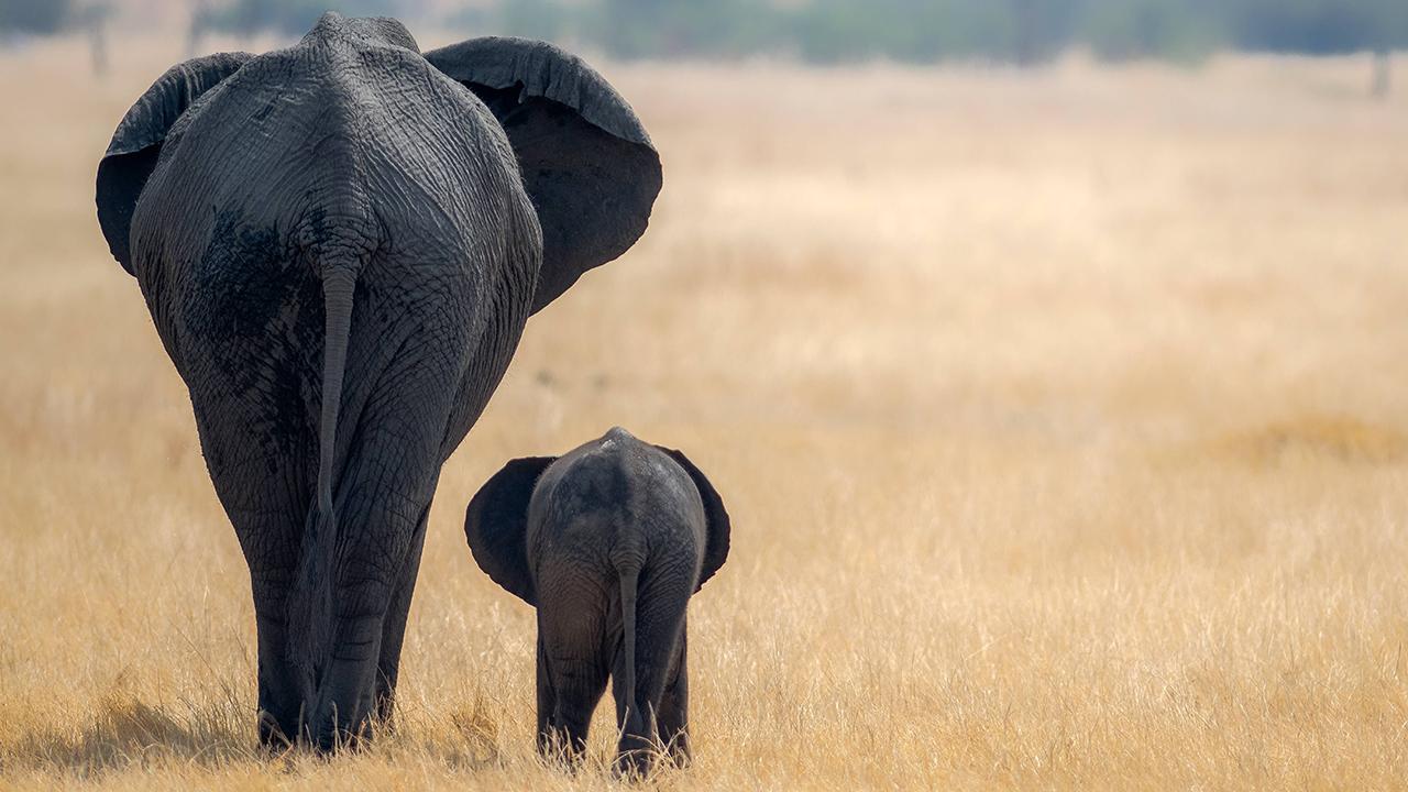 Radioday Raus und weg  Frhstck mit Elefanten  radioeins